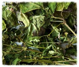 Patchouliblätter-geschnitten